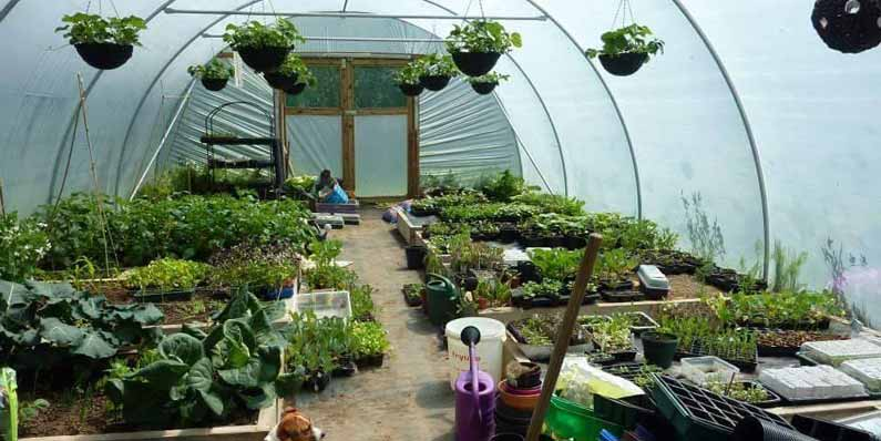 Do I Need a Polytunnel?