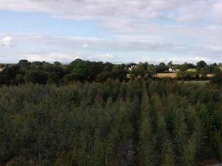 Eucalyptus Trees Dplant Ie